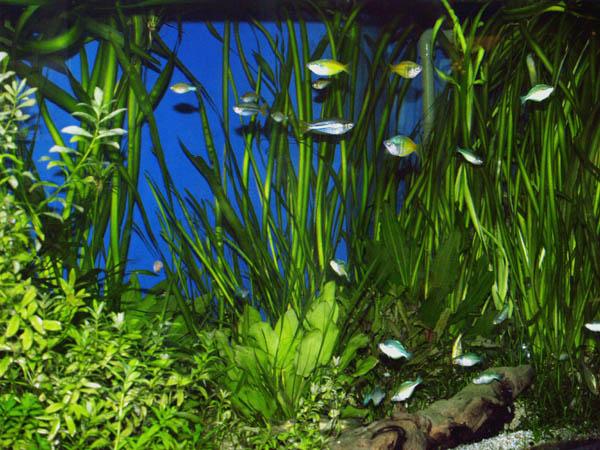 Aquarium Tonhöhlen