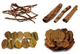 Seemandelbaum - Blätter + Rinden