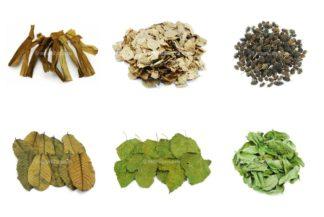Erlenzäpfchen + Blätter - Walnuss, Guave, Banane, Maulbeer...