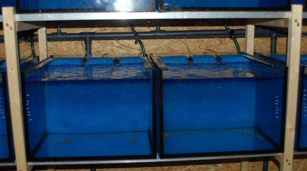 Neuer Raum 2 Aquarien fertig mit Wasser