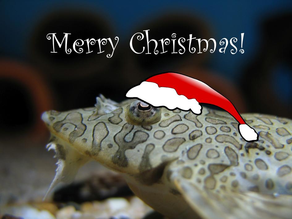 Unser Weihnachtsgeschenk für Euch - 10 % Rabatt bis zum 31.12.2017 ...