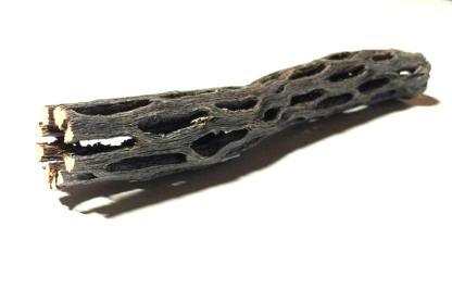 cholla Kaktusholz 2x15 cm Ø Aquarium