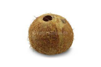 Kokosnusshalbschale Kokosnussiglu kleine Öffnung