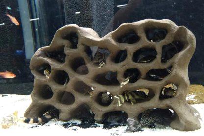 Löcherfelsen Jungfischfelsen im Aquarium mit L-Welsen