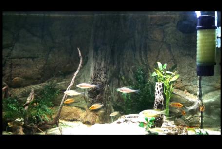Aquarienfilter