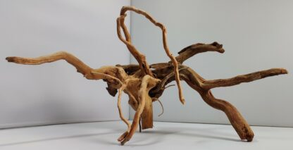 B1-1 Spiderwood
