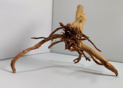 B10-2 Spiderwood