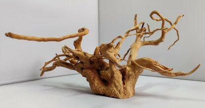 B11-2 Spiderwood