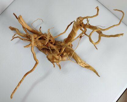 B11-3 Spiderwood