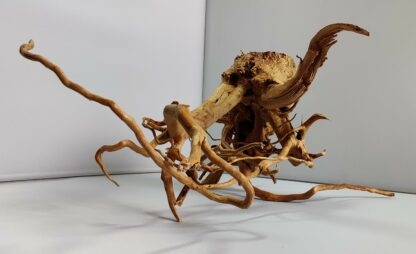 B11-5 Spiderwood