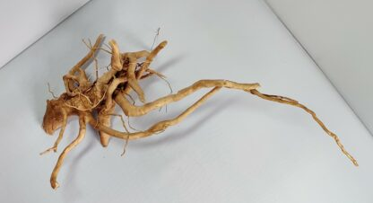 B13-3 Spiderwood
