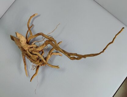 B13-4 Spiderwood