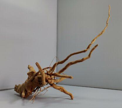 B13-5 Spiderwood