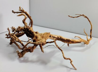 B14-2 Spiderwood