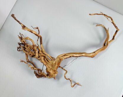 B14-3 Spiderwood
