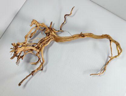 B14-4 Spiderwood