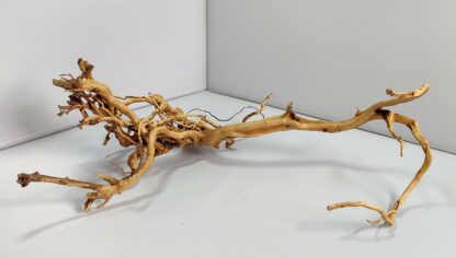 B14-5 Spiderwood