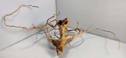 B17-3 Spiderwood