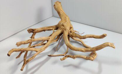 B3-2 Spiderwood