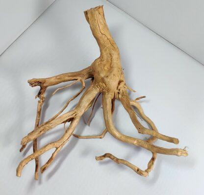B3-3 Spiderwood