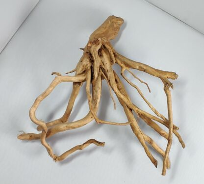 B3-4 Spiderwood