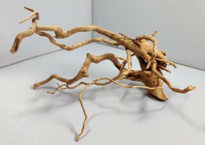 B5-1 Spiderwood