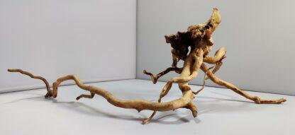 B7-1 Spiderwood