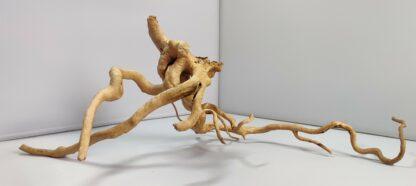 B7-2 Spiderwood