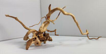 B7-4 Spiderwood