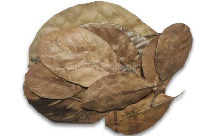 Jackfruchtblätter getrocknet für Aquarium