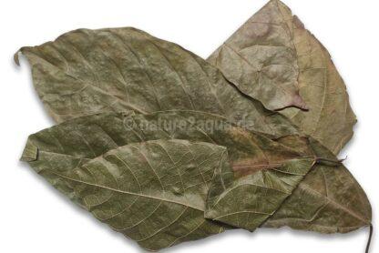Kakaoblätter getrocknet für Aquarium